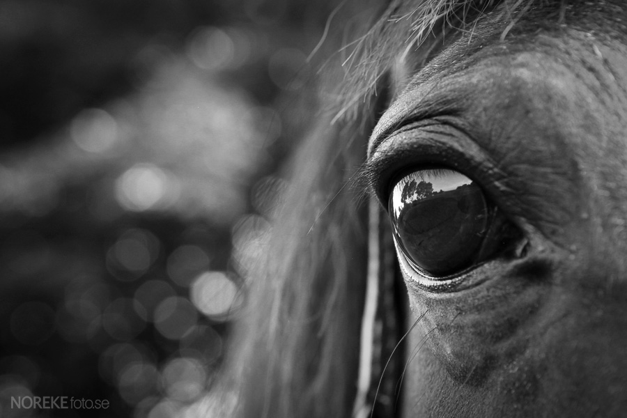 The World In The Eye Of A Horse Fotograf Skane